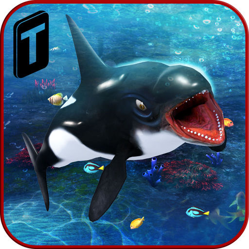 Killer Whale Beach Attack