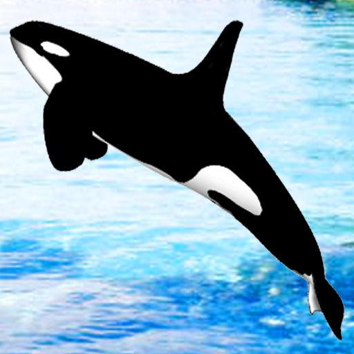 Whale Hoops