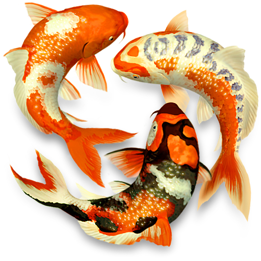 Koi Pond Purchase For Mac Macupdate