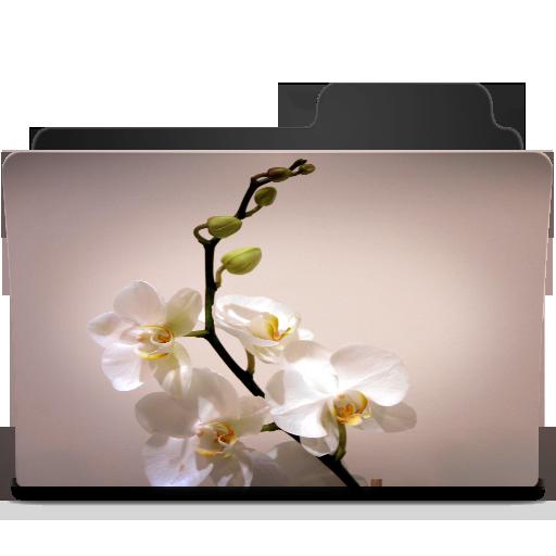 White Lilie Icon
