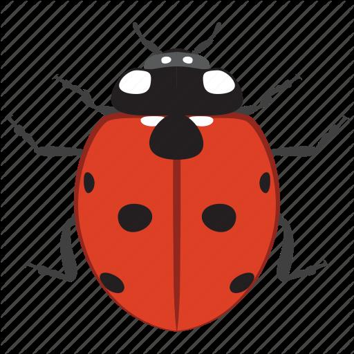 Beetle, Bug, Insect, Ladybird, Ladybug Icon