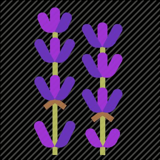 Aroma, Essential, Flower, Fragrant, Lavender, Oil, Scent Icon
