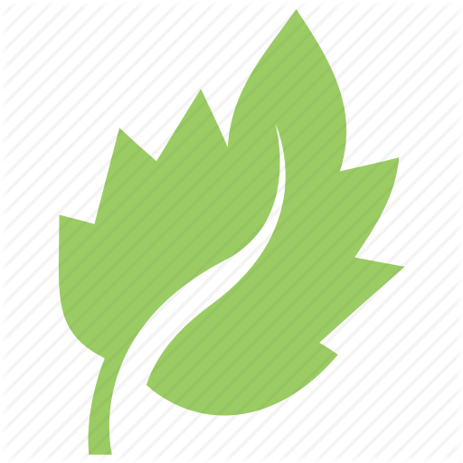 Bolleana Poplar Leaf, Foliage, Green Leaf, Leaf, Tree Leaf Icon