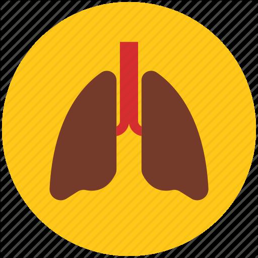 Anatomy, Body Lungs, Body Organ, Breathe, Lungs, Pulmonology Icon