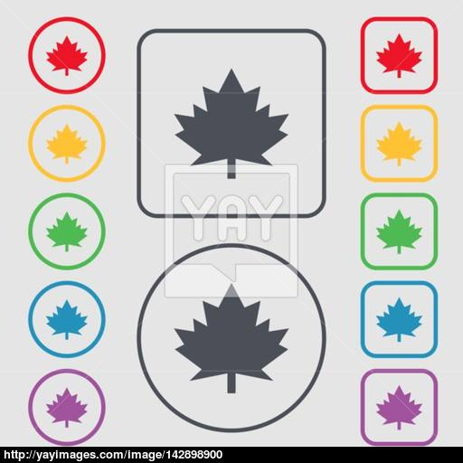 Maple Leaf Icon Symbols On The Round And Square Buttons
