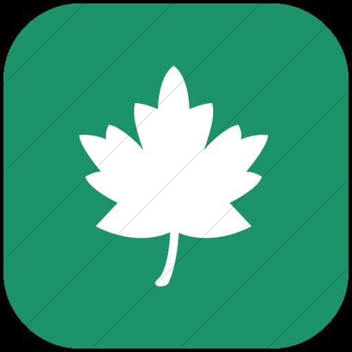 Flat Rounded Square White On Aqua Classica Maple Leaf