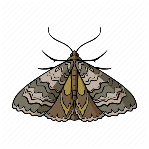 Animal, Arthropod, Insect, Moth Butterfly Icon