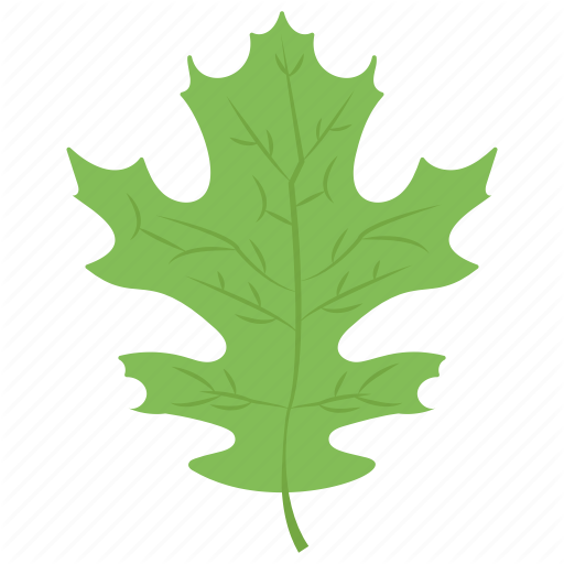 Lettuce Leaf, Oak, Oak Leaf, Palm Leaf, Plant Icon