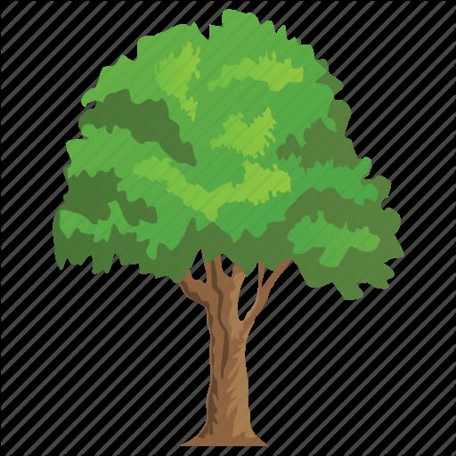 Ash Tree, Deciduous Tree, Firewood, Greenery, Olive Family Icon