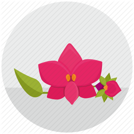 Bud, Flower, Orchid, Plant, Round Icon