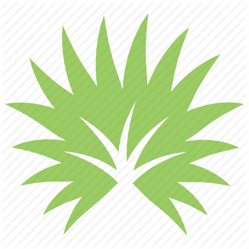 Fan Palm, Palm Leaf, Palm Sunday Leaf, Palmetto Leaf, Tropical