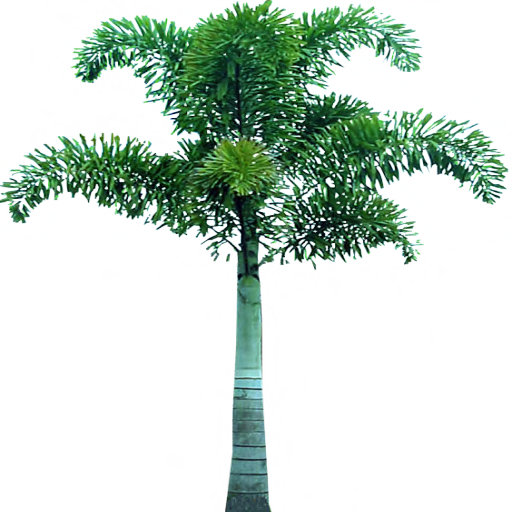 Palm Tree Transparent Png Pictures