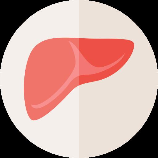 Medical, Organ, Anatomy, Liver, Healthcare And Medical, Body Parts