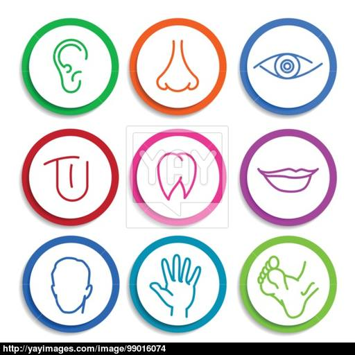 Set Of Vector Icons Human Body Parts Vector