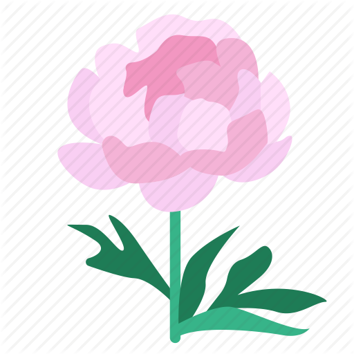 Bloom, Flora, Flower, Peony, Plant, Showy, Shrubby Icon