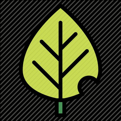 Botanical, Leaf, Leave, Plant Icon
