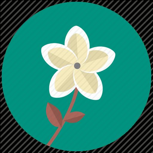 Blossom, Flower, Frangipani, Plant, Plumeria Icon