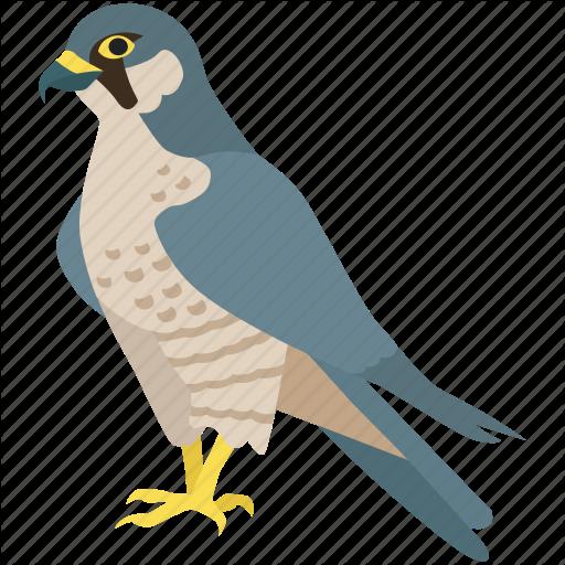 Bird, Duck, Eagle, Hawk, Peregrine Falcon, Prey Icon