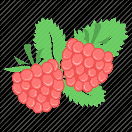 Berry, Food, Fruit, Raspberries, Raspberry Icon