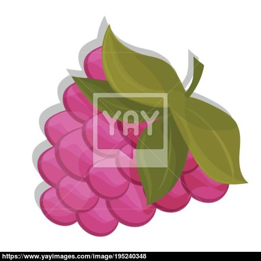Sweet Berry Isolated On White Background Vector Icon Raspberry