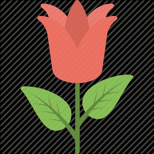 Beautiful Flower, Flower, Greeting Flower, Red Flower, Rose Icon