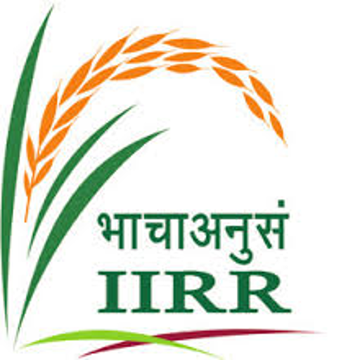 Ap Rice Production Technology