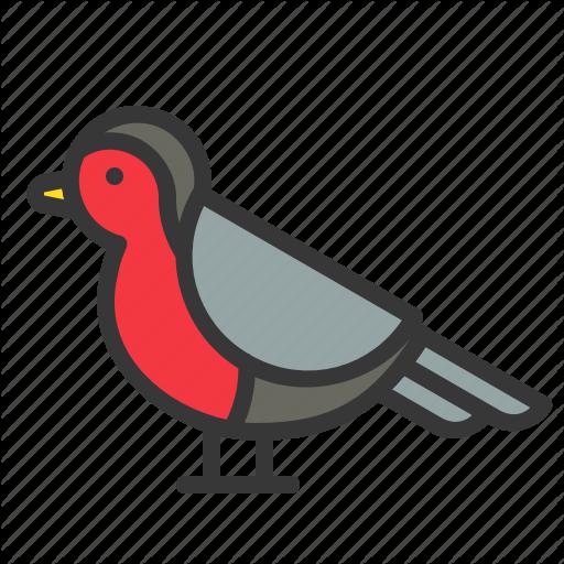 Animal, Bird, Christmas, Robn