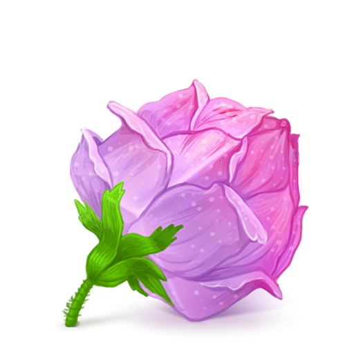 Box Rose Pink Icon Iconshow