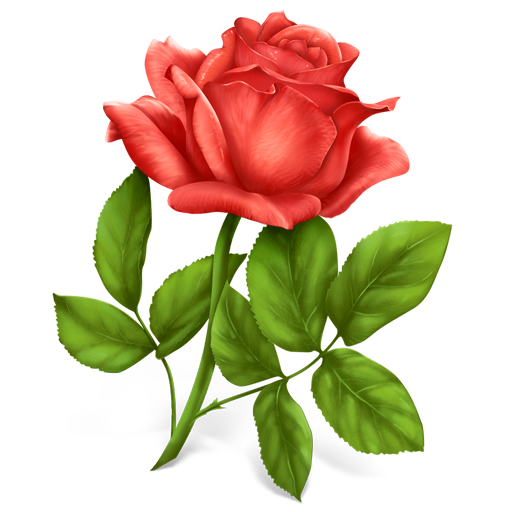 Free Icons Rose Icondrawer
