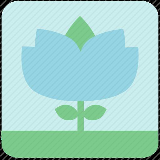 Blue Flower, Floral, Flowers, Garden, Garden Flowers, Garden