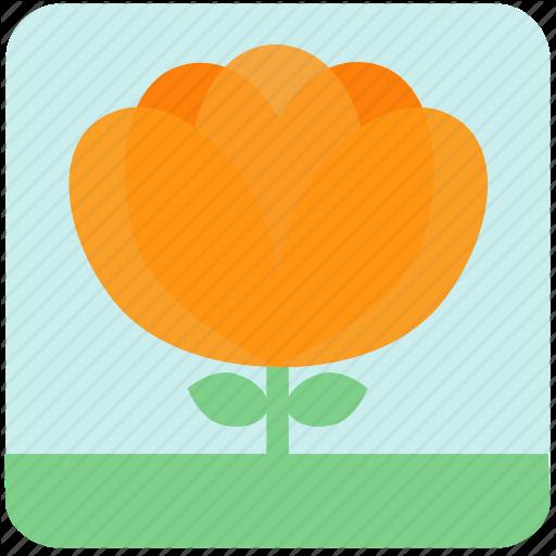 Floral, Flowers, Garden, Garden Flowers, Garden Plants, Orange