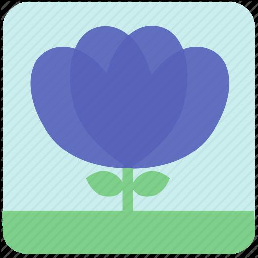 Floral, Flowers, Garden, Garden Flowers, Garden Plants, Plants