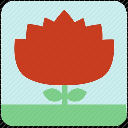 Flowers, Garden, Garden Flowers, Garden Plants, Orange Flower