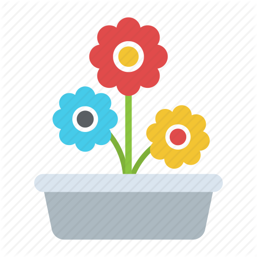 Daisy Plant, Indoor Plant, Ornamental Flowers, Pot Plant, Spring
