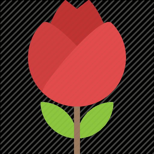 Lotus Bud, Natural Beauty, Seasonal Flower, Spring Season, Water