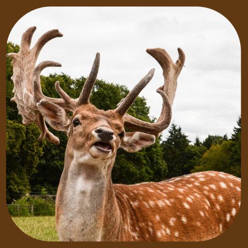 Wild Stag Animal Sniper Hunter Simulator App
