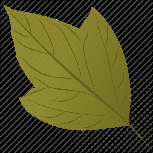 Acer Rubrum, Autumn Leaf, Foliage, Leaf, Swamp Maple Icon