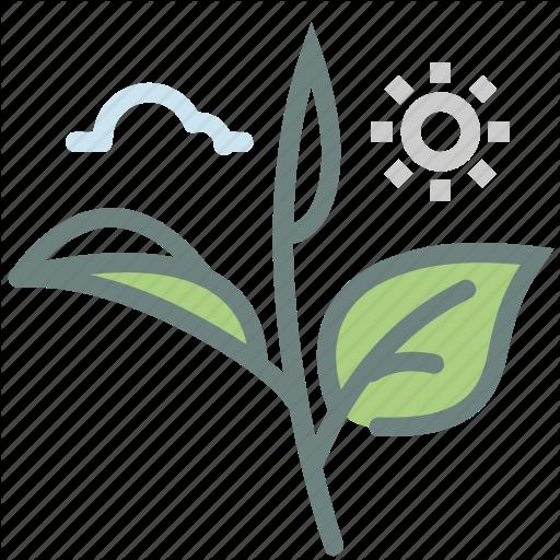 Green Tea, Herb, Leaf, Leaves, Matcha, Tea, Tea Leaves Icon
