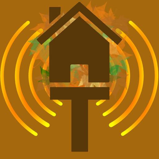 Treehouse Radio