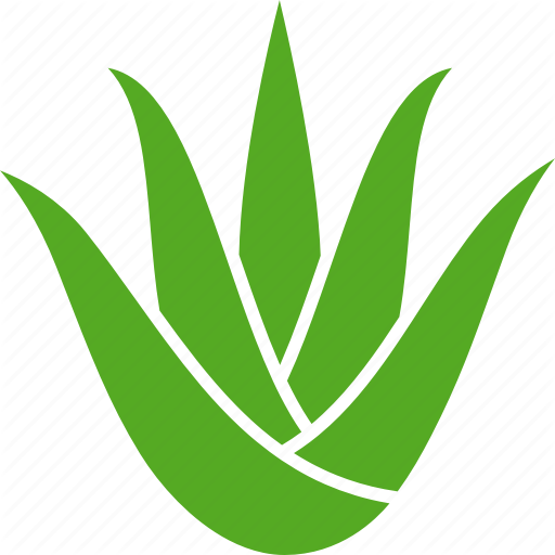 Aloe, Aristata, Leaves, Plant, Soothing, Succulent, Vera Icon