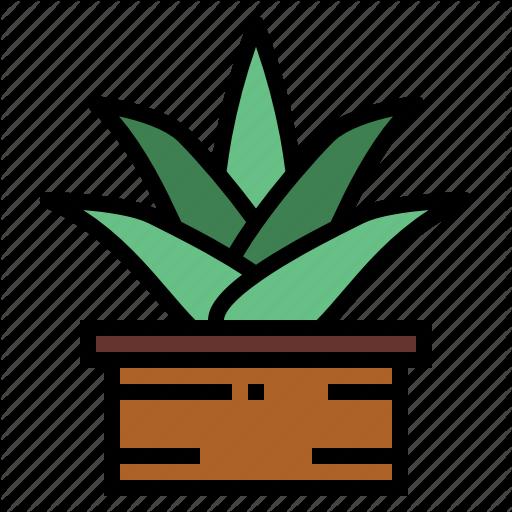 Aloe, Gardening, Medical, Plant, Vera Icon