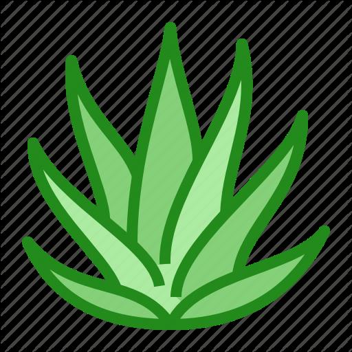 Aloe, Leaves, Plant, Succulent, Vera Icon