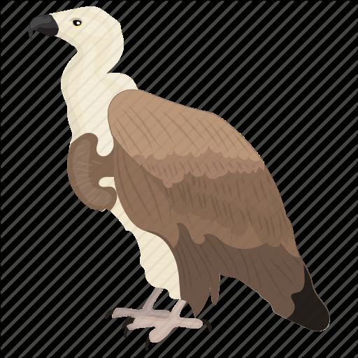 Bird, Giant Bird, Prey Bird, Vulture, Wildlife Icon