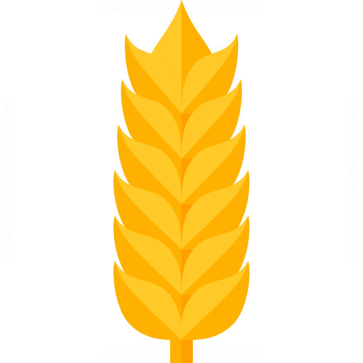 Iconexperience G Collection Wheat Icon