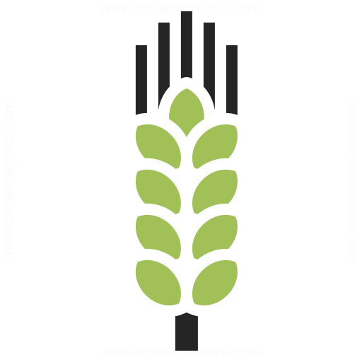 Wheat Icon Iconexperience