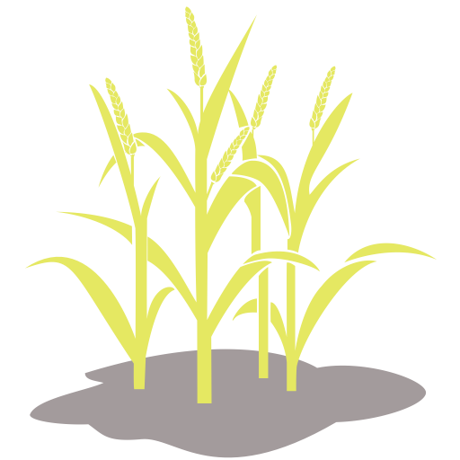 Vector Wheat Crop Transparent Png Clipart Free Download