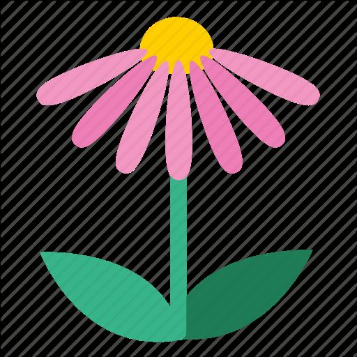 Blooming, Coneflower, Echinacea, Floral, Flower, Plant, Wildflower
