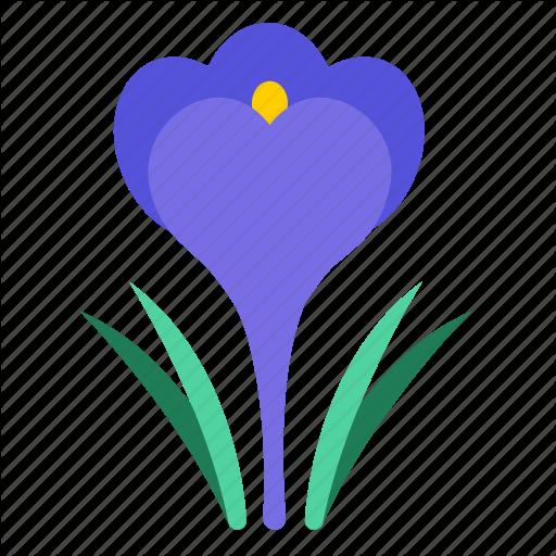 Blossom, Croci, Crocus, Floral, Flower, Flowering Plants