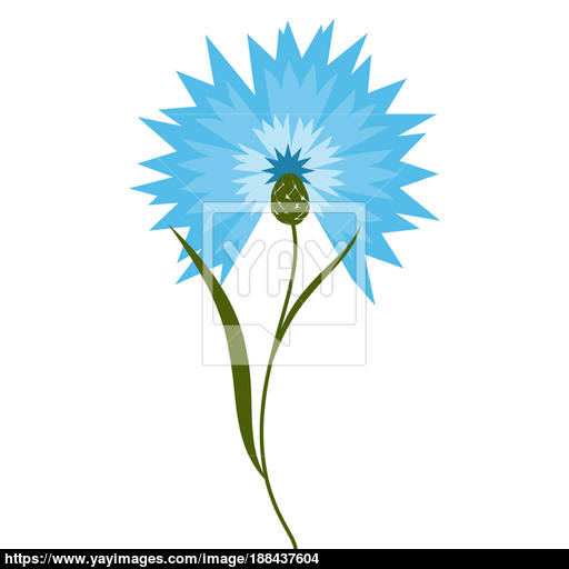 Blue Flower Cornflower Isolated On White Background Cartoon