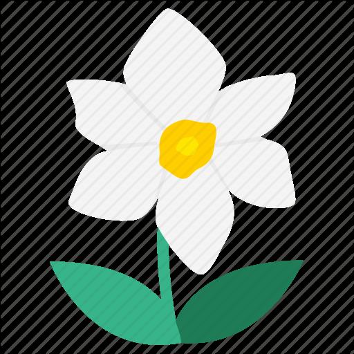 Daffodil, Flower, Flowering Plants, Flowers, Garden, Narcissus